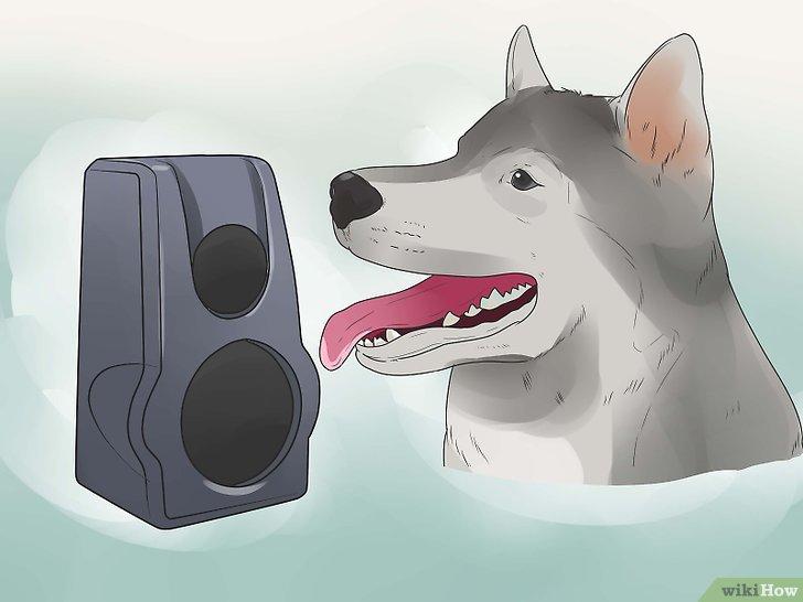 modele de petition pour chien qui aboie